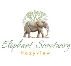 Elephant Sanctuary - Hazyview