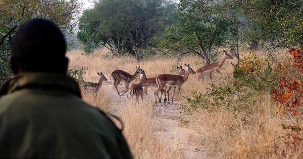 Mpumalanga - Manyeleti Nature Reserve Festive Special , South Africa