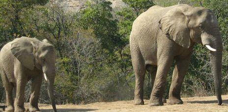 Mpumalanga - Tour & Safari Experience, South Africa
