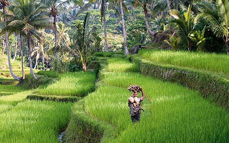 Harvey World Travel Centurion - Holiday in Indonesia - Bali an Indonesian Paradise