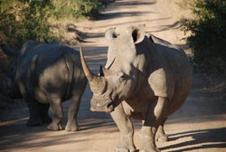 Joburg Tourism - Rhino & Lion Park , South Africa