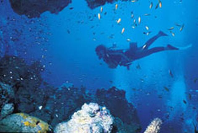 TRAVELFIX - 11 Day Scuba Diving and Safari, South Africa