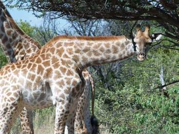 Karamoja African Bush Safari in Hartbeesfontein