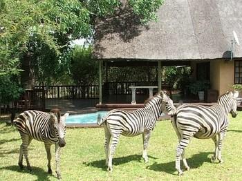 Needles Safari Lodge in Marloth Park